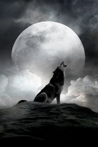 Wolves: #Wolf and #Full #Moon.