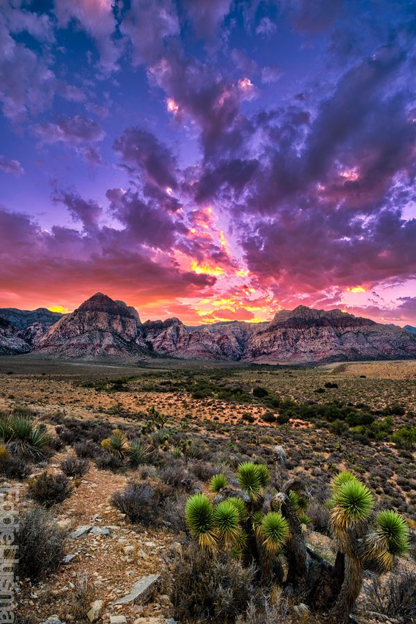 Red Rock Canyon, Nevada, 20 minutes outside of Las Vegas.