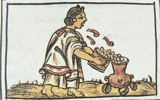 El maíz con las características que conocemos ahora es producto de la evolución de la especie silvestre llamada teocintle, la de genética más cercana a la planta cultivada. El teocintle, como otros cereales en el mundo, tenía características que la hacían atractiva para los grupos de cazadores-recolectores, los que la buscaban por su abundancia, por lo relativamente sencillo que era retirar sus semillas (los granos) y porque éstos resultaban aptos para su consumo.