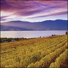 Okanagan Valley: British Columbia's emerging Okanagan Valley has the makings of a serious wine region, with plenty of good eats and innovative wineries to visit. (Pictured: vineyards of Mission Hill overlooking Lake Okanagan.)