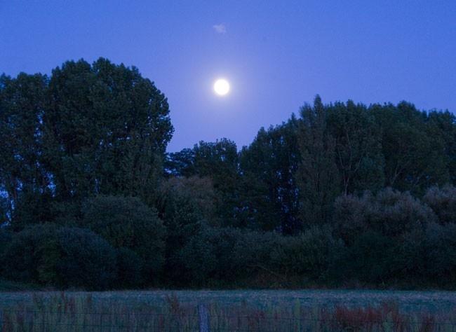 www.rustica.fr - Calendrier lunaire : novembre 2012