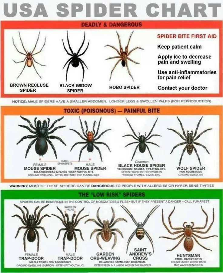 "The only spiders on here I have owned are the ""Deadly and Dangerous"".."
