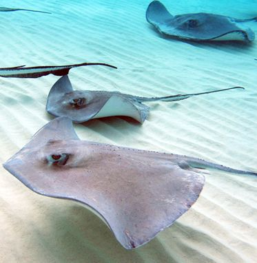 Stingray City, Grand Cayman Island!  So much fun and the sting rays were so soft and sweet!