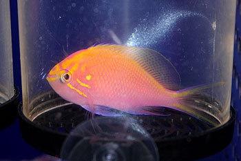 お魚いろいろ♪の画像 | 東京サンマリン 海水担当のブログ
