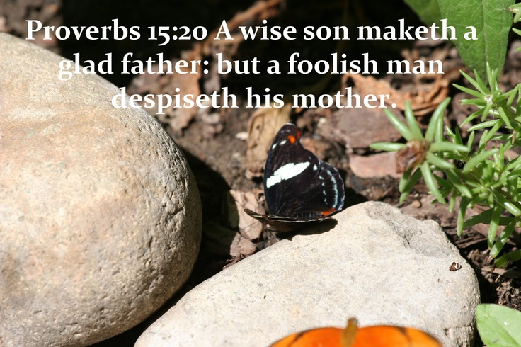 the wisdom jesus study guide