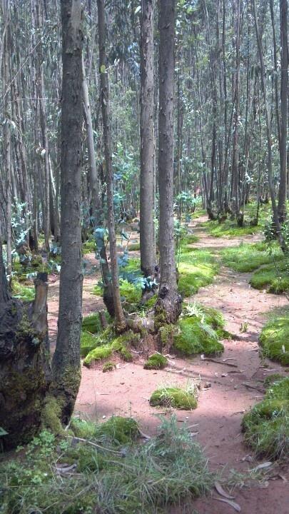 Hiking on Entoto Mountain in Ethiopia Addis Ababa Africa