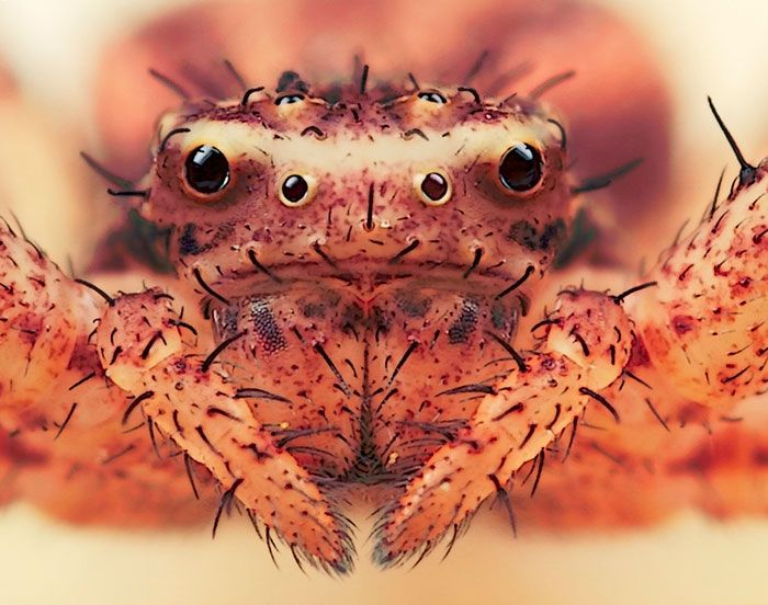 pics of jumping and crab spiders | ... View of Our Garden - Photographing Insects & Spiders by Huub de Waard