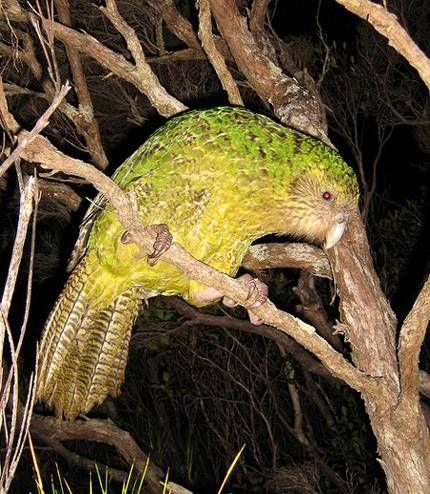 Самые редкие животные птицы планеты