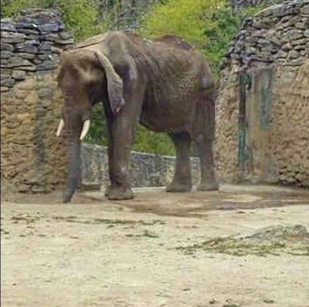 are zoos inhumane essay Are zoos exploiting animals for profit are they prisons for wild animals.