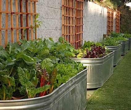 Best 20 feed trough ideas on pinterest - Galvanized containers for gardening ...
