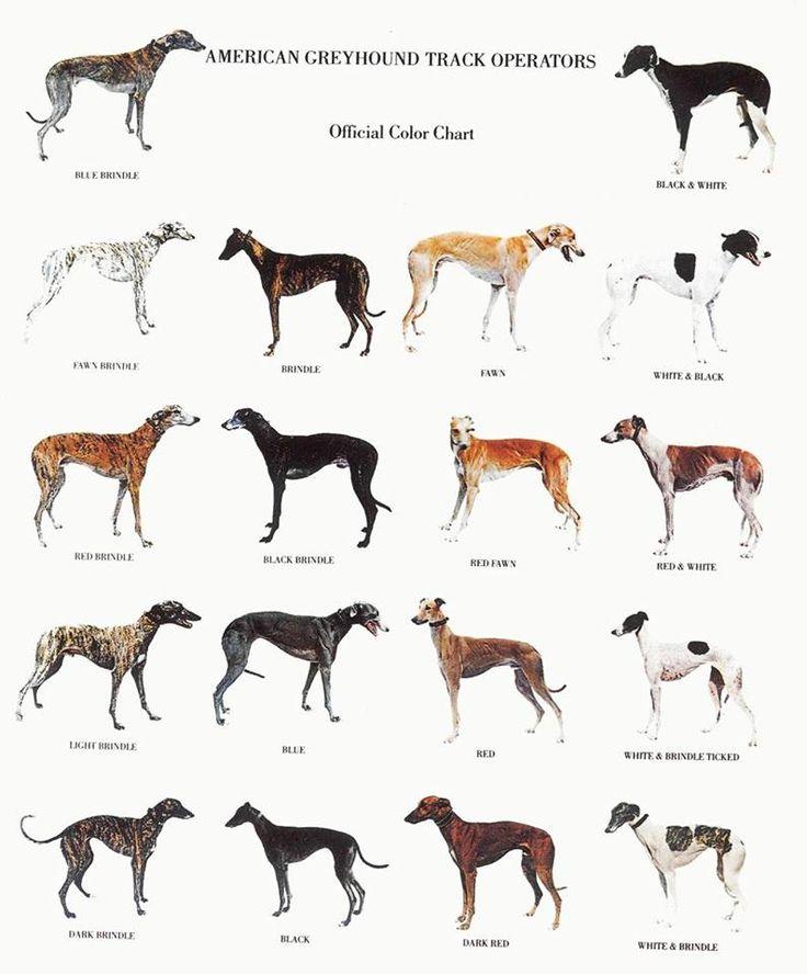 488 besten deerhounds & friends Bilder auf Pinterest   Tiere ...