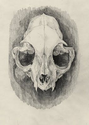 how to draw a cat skull