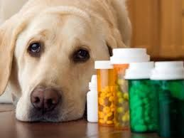 Aspirin dosage for dogs