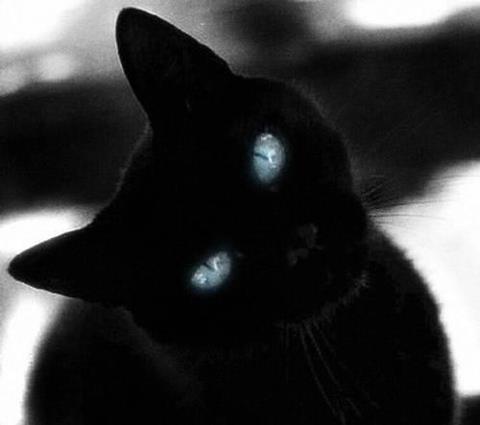 The Chilling Forest cats D40630ff68a11e8d2035988e8b16edbe