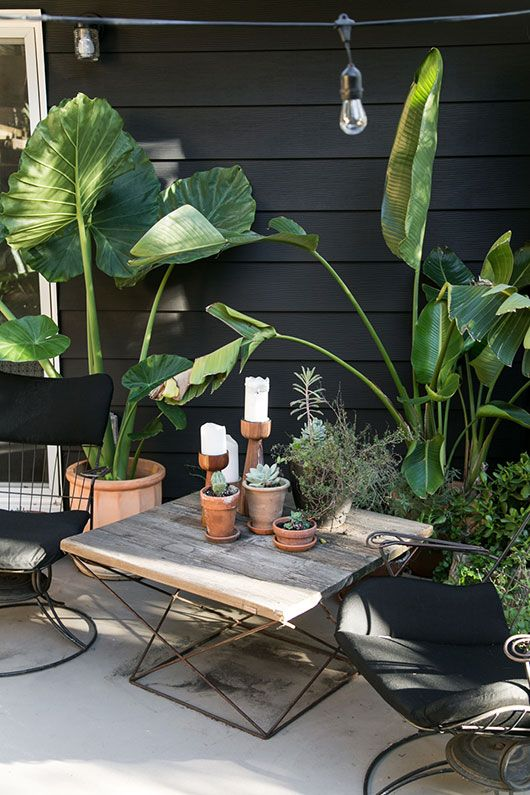 my black and white back patio with greenery / sfgirlbybay