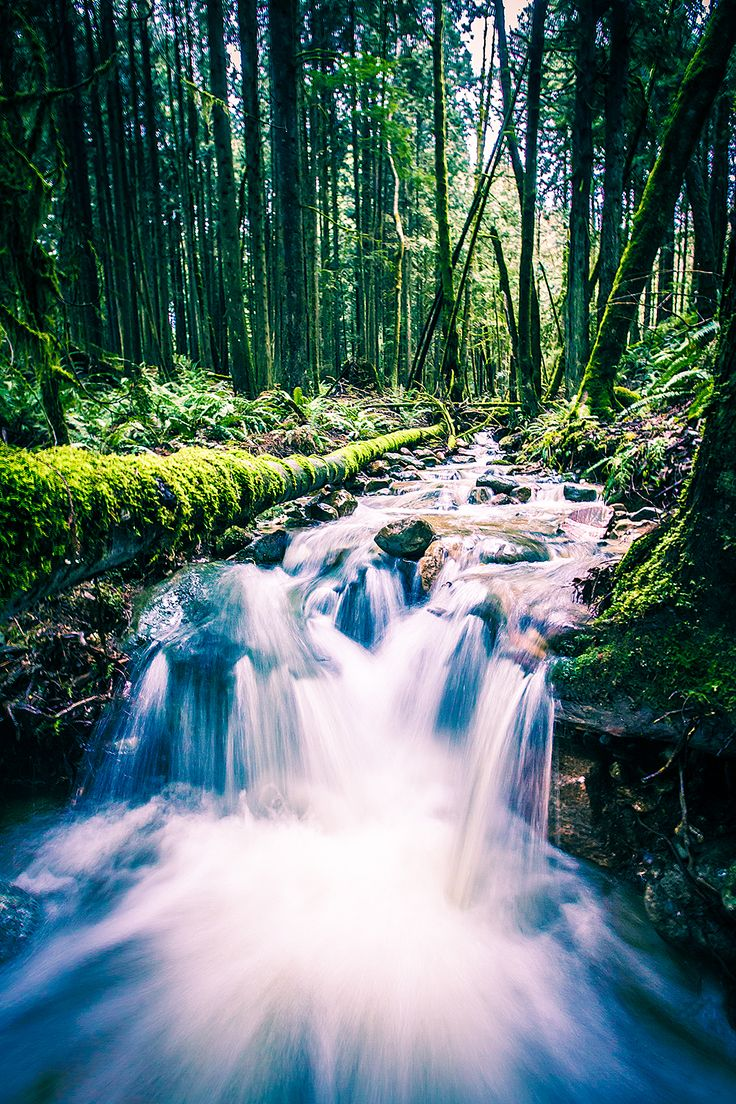 Pretty little stream on Burke Mountain BC [10641596] (OC) #reddit