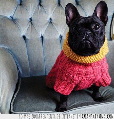 15 Animales que pasan menos frío que tú #animals #cold #cute #clothes #winter #pet #cat #dog