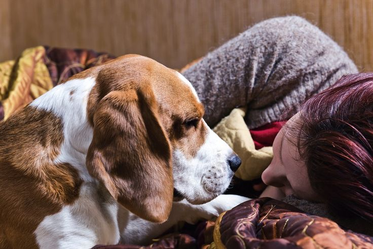 A whiff of an oxytocin nasal spray could make dogs friendlier towards their owners.
