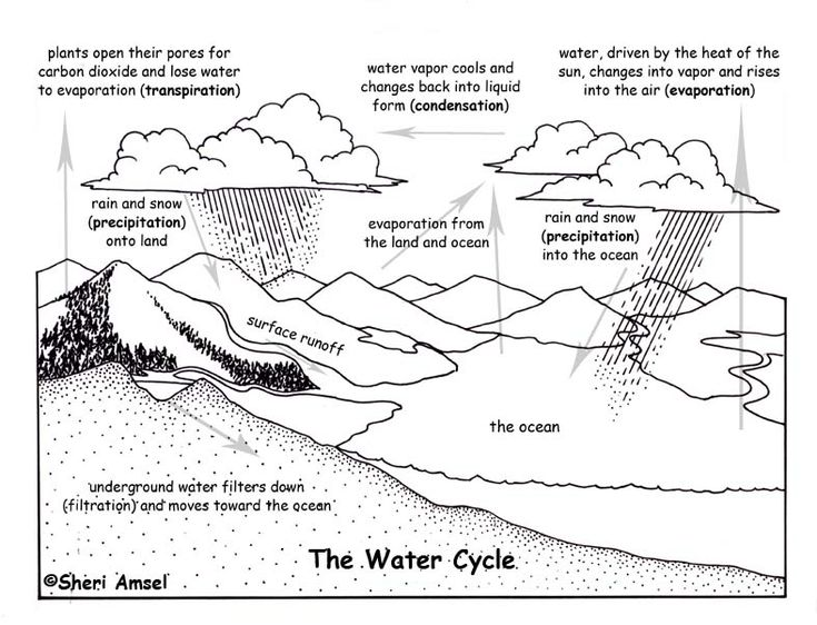 water cycle  science and water on pinterest