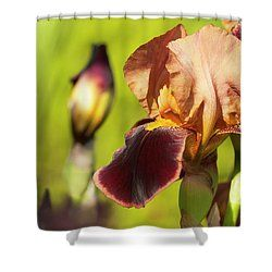 Flowering irises by Yarinka Morozova  Close-up photographed in the garden of irises, on a blurred violet-green background, illuminated by a bright spring sun # Irises # spring # garden # flowers # purple # green#Yarinka MorozovaFeineArtPhotography#ArtForHome#showercurtain#