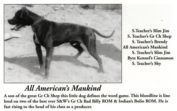 Image result for historic game bred pitbulls