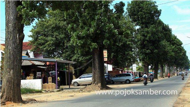... dan Jalan Jenderal Sudirman di Kota Metro, tidak serta merta membuat tingkat polusi tinggi. Sebab di sepanjang jalan tersebut, ada pohon Mahoni.