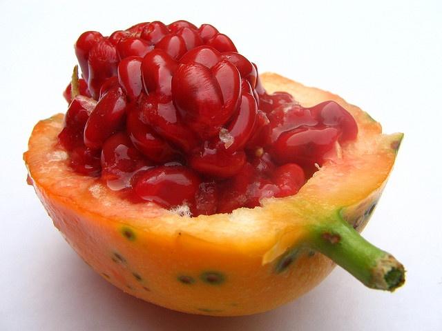 Passiflora caerulea (fruit)