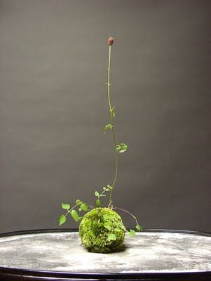 """Kokedama - http://sala-sala-sala.blogspot.com/ says """"It would be called """"Moss Ball Bonsai"""" in English. (""""Koke"""" is """"moss"""" and """"dama"""" is """"ball"""" in English.)"""". This photo is from http://ii-ne-kore.blogspot.com/2009/05/kokedama.html . I can't wait to try this!"""
