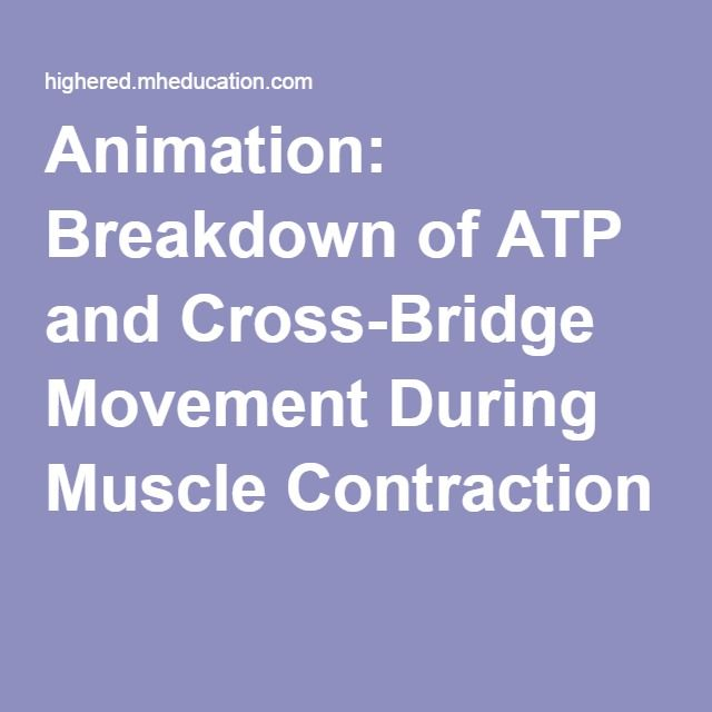 17 best ideas about muscle contraction on pinterest | physiology, Muscles