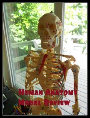 Using Human Anatomy Models for #homeschool science