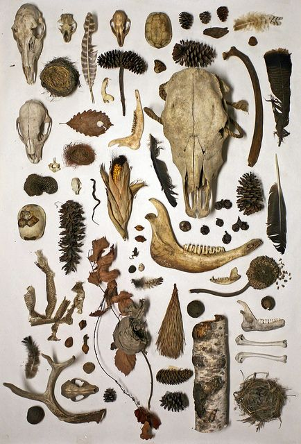 Scavengers, skulls, collection, feathers, natural objects