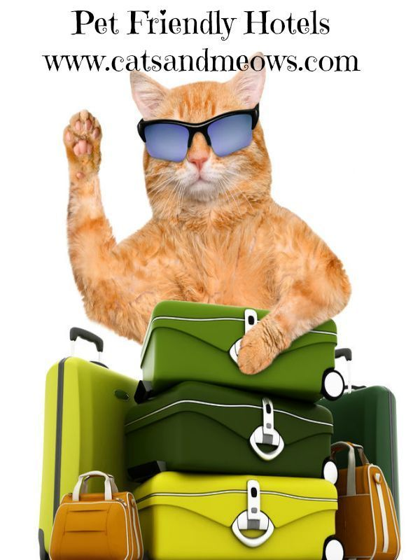 Traveling With Your Cat - Try These Pet Friendly Hotels    #ilovemycat #cathotel #travelcats
