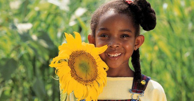 """Información para niños sobre plantas de girasol. Intensos y coloridos, altos e inusuales, los girasoles son plantas divertidas y fáciles de cultivar para los niños. Lo único que precisan es una parcela con suelo de buen drenaje, mucha agua y mucho sol. El nombre científico del girasol es Helianthus, que deriva de """"helius"""" (sol) y """"anthus"""" (flor)."""