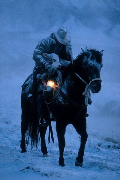 the rescuer black and white horse light snow dark cold