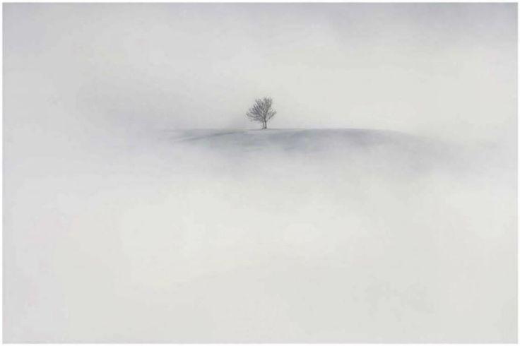Vincent Munier paysage Estampe