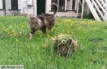 This cat was purrfectly camouflaged | Gif Finder – Find and Share funny animated gifs