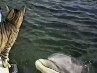 New trending GIF on Giphy. cat animals dolphin boop animal friendship. Follow Me CooliPhone6Case on Twitter Facebook Google Instagram LinkedIn Blogger Tumblr Youtube