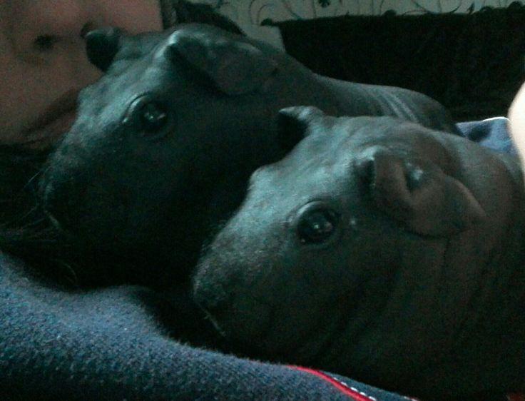 good morning my little mini hippos :-)
