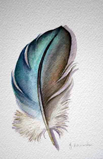 Mystery Feather Original Watercolor Nightly Study by jodyvanB