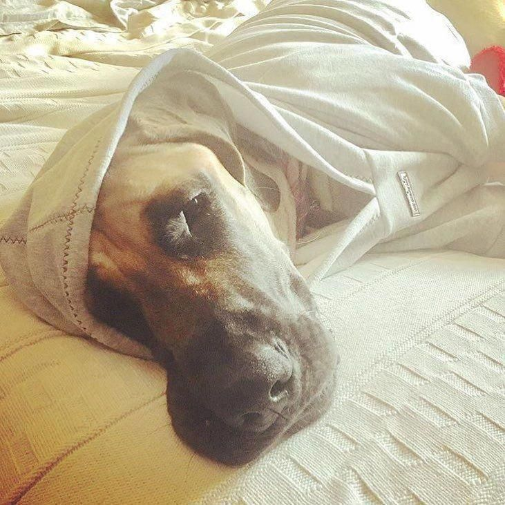 Excellent Great Dane Information Is Offered On Our Site Have A