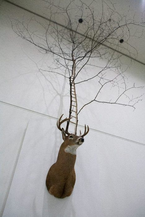 Myeongbeom Kim: Untitled Deer Taxidermy | Art Installations, Sculpture, Contemporary Art | Scoop.it