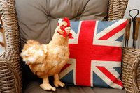 Kullanruskea kana
