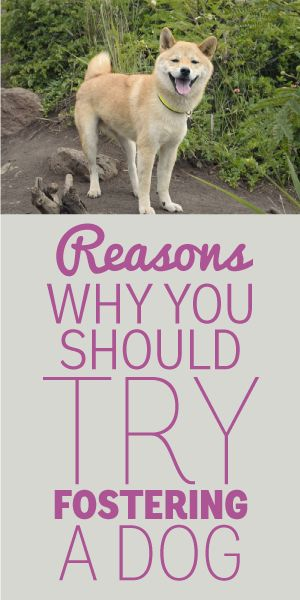 Reasons Why You Should Try Fostering A Dog!