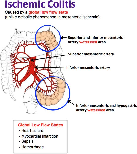 58 best gi images on pinterest | medical students, disorders and, Skeleton