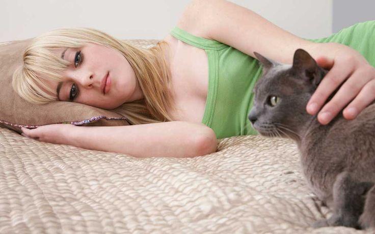 Katzenhaare entfernen: 6 praxiserprobte Tipps für dich