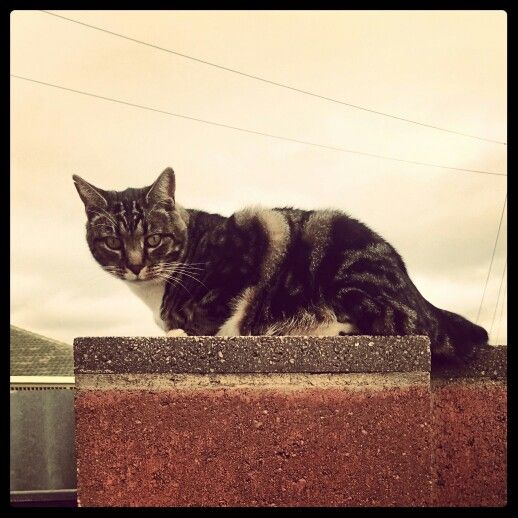 Thomas the cat. On the watch tower.