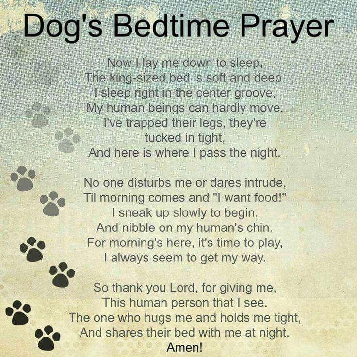 Dog's Prayer  So cute! | dog stuff | Dog poems, A dogs prayer, Dogs