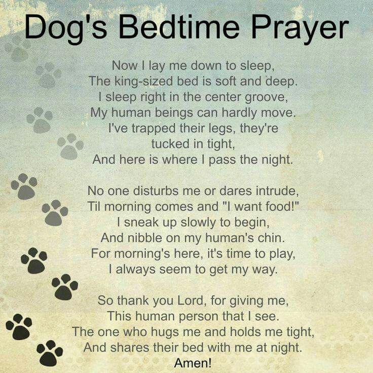 A Dog S Prayer Poem