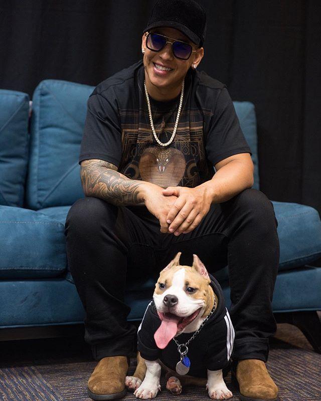 Daddy Yankee 😍 El pana!