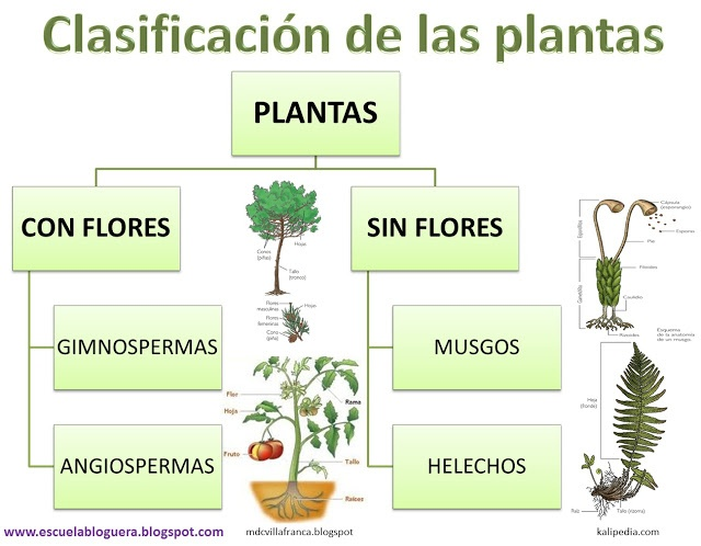 32 best los seres vivos images on pinterest ciencia for Caracteristicas de las plantas ornamentales